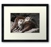 Oriental small-clawed otter Framed Print