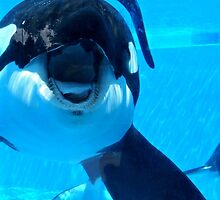 Tilikum by Sarah14906
