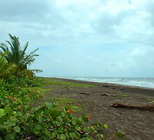 View of the Caribbean Sea by Furlong
