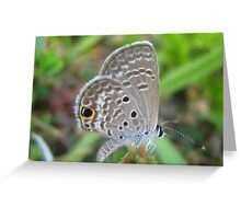 Beautiful Moth Greeting Card