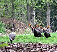 THAT'S BULL Turkeys by Ann Rodriquez