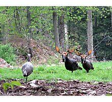 THAT'S BULL Turkeys Photographic Print