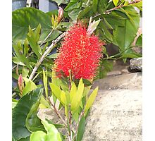 """ Bottle brush. "" Photographic Print"