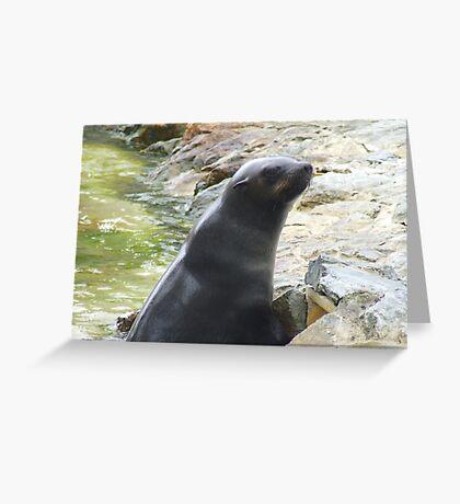 Fur Seal Greeting Card
