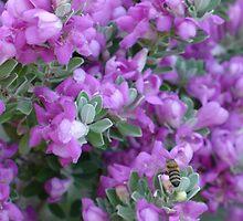 Honeybee in the Cenizo by Cathy Jones