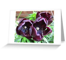 Trio of Tulips Greeting Card