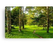natural scene at Junjung Canvas Print