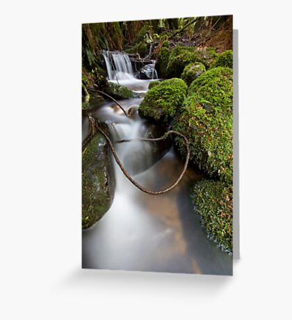 Lasso at Cement Creek Greeting Card