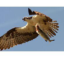 Predator Photographic Print