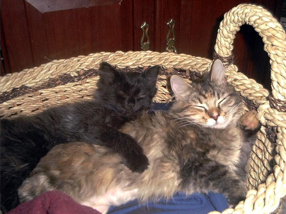 kitty hug by tornadowinds