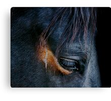Equine Abstract Canvas Print