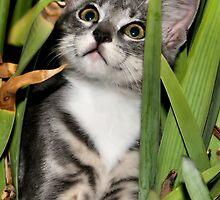 Kitty Pose by Debbie Irwin