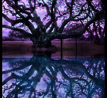 The Big Oak Tree Over 1000 Year Old Oak in Lamar TX by Surrealfantasy