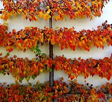 Colours of Autumn - Tamed by Marilyn Harris