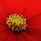 Red by Nikki Collier