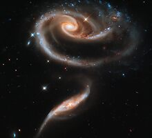 Hubble Space Telescope Print 0016 - A  Rose  Made of Galaxies Highlights Hubble's 21st Anniversary - hs-2011-11-a-full_jpg by wetdryvac