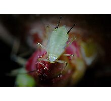 Aphid Photographic Print