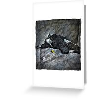 Crumpled Up & Thrown Away Greeting Card