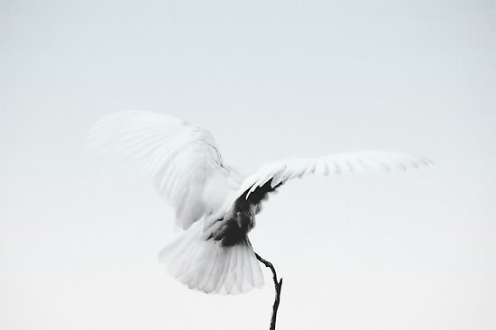 ~On Silent Wings~ by a~m .