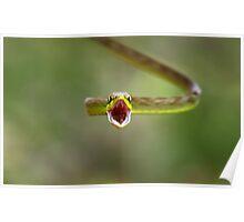 Green parrot snake, Costa Rica Poster