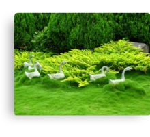 Geese in a Sea of Green - Hunter Valley Gardens Canvas Print