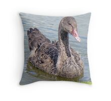 A Black Swan Cygnet Throw Pillow
