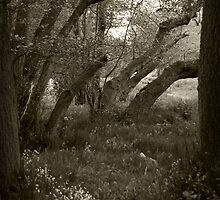 Old woods... by amzb87