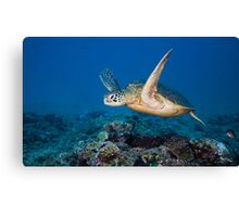 Icon of the Reef Canvas Print