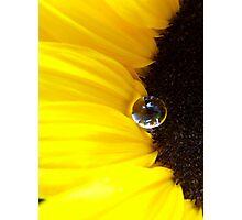 Sunflower tear Photographic Print