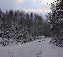 Winter Wonderland by Trevor Kersley