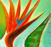 """"""" Bird of Paradise """" by Exhibition"""