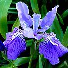 Fleur-de-lis by Magee
