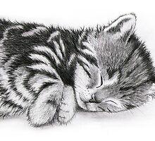 Sleepy Beauty by Adam Stone