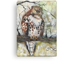 Young Red-tailed Hawk, Perched Canvas Print