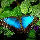 Blue Beauty by Christina Martin