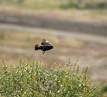 Practice Landing; Camp Pendleton/San Diego, CA U.S.A. by leih2008