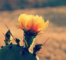 Prickly Pear Cactus Bloom  by April Larson