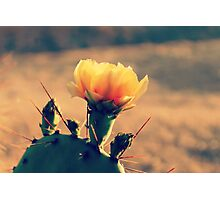 Prickly Pear Cactus Bloom 1 Photographic Print