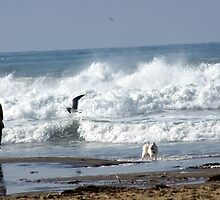 """Oh Mamma!  It Flies!""  ""Good Dog!"" ; Beach Capture just south of Morro Bay, CA USA by leih2008"