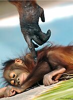 Wake Up Little One by Sue  Cullumber