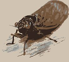 Cicada by Shaun McCabe