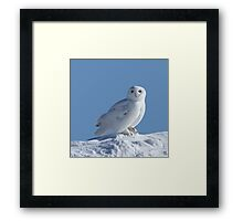 Saint Of The Snow Framed Print