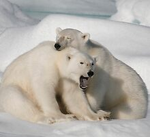 Polar Brothers by Steve Bulford