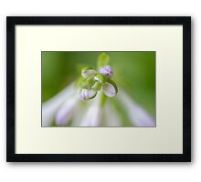 Hosta Flower Framed Print