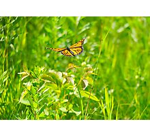 Flight of the Monarch Photographic Print