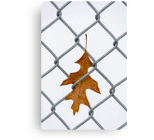 Caught in left field Canvas Print