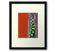 Creeper, Red, Tree Framed Print
