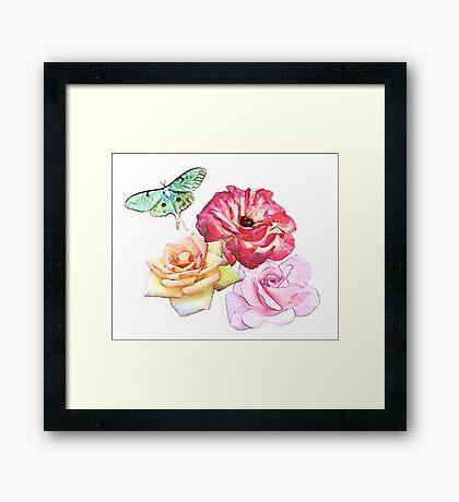 Rose Collage Framed Print