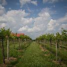 Fruit Of The Vine by Eric Scott Birdwhistell