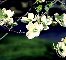 Blooming Branches of Spring by Mary Campbell